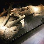 พิพิธภัณฑ์ประวัติศาสตร์ธรรมชาติ ภาพถ่าย