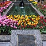 Tulips outside