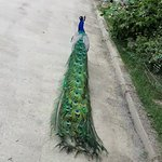Zoo Brno Photo