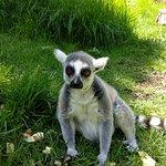 Bild från Haifa Educational Zoo