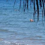 Jean-Claude va snorkeler devant la Plage