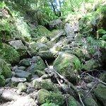 Bad Schandau - Nationalpark 2