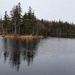 Isoletta di conifere