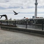 Photo of Sumida Park