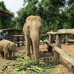 Blue Tao Elephant Village