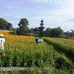 flower field in middle of Bali