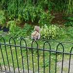 海德公园照片