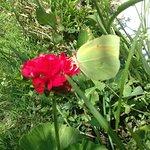 Beautiful butterflies everyday