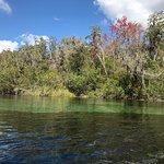 Foto de Rainbow River