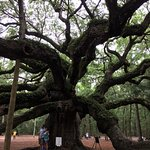 Charming tree in a lovely park