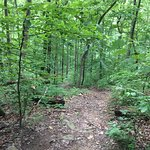 Foto de Kanawha State Forest