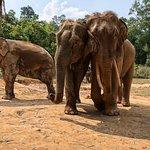 Karen's Tribe Native Elephants