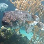 Bermuda Aquarium, Natural History Museum & Zoo照片