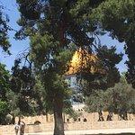 Garden of Gethsemane – fotografija