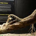 Это скелеты змей
