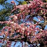Beautiful plum blossoms