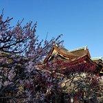 Shrine building with plum blossoms