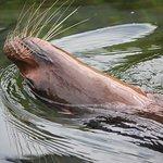 Woburn Safari Park Photo