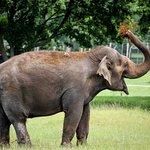 Woburn Safari Park : A beautiful animal