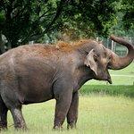 Woburn Safari Park : Up close and personal