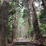 Awe-inspiring trees