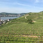 View from the cable car of the Rhine and vineyards.