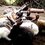 Conejos (Bienestar animal)