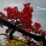 Discovery Kyoto Foto