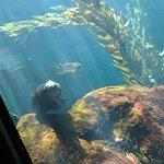 Monterey Bay Aquarium ภาพถ่าย