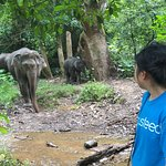 MandaLao Elephant Conservation ภาพถ่าย