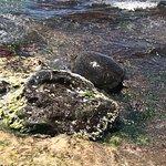 Laniakea Beach ภาพถ่าย
