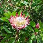 Foto de The Blue Mountains Botanic Garden