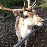 Paradise Valley Springs Wildlife Park Photo