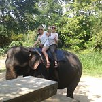 Elephant ride Sri lanka