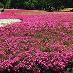 Фотография Hitsujiyama Park