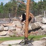 Ahtari Zoo ภาพถ่าย