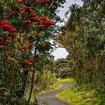 Trail through through the nature reserve.