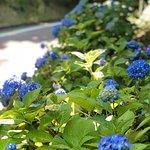 Takasaki City Senryo Botanical Garden照片