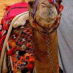 Zdjęcie My Odyssey Tours Cairo 1 Day