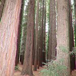 Inside are the Redwood trees