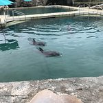Photo of Dolphin Quest