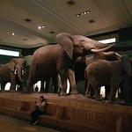 美国自然历史博物馆照片