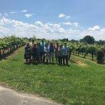 The beautiful vineyards on a beautiful day!