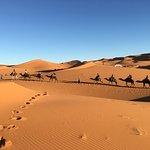 Camels House-bild