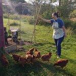 New hens!