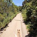 Trail up to Douglas Family Preserve