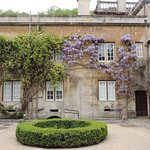 Wisteria in the courtyard