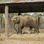 Photo of Elephant Breeding Centre