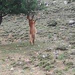 Safari Experts Crete Photo