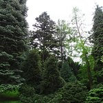 Хвойный сад